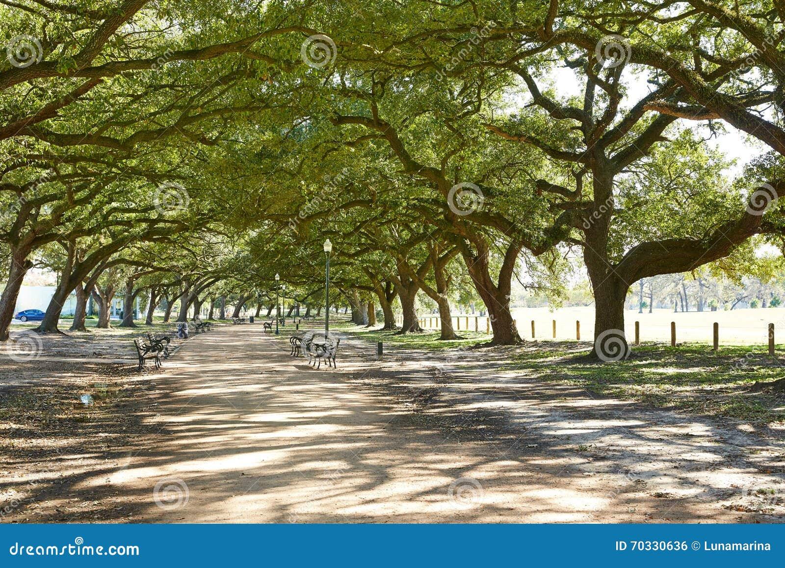 Rastro de Marvin Taylor del parque de Houston Hermann