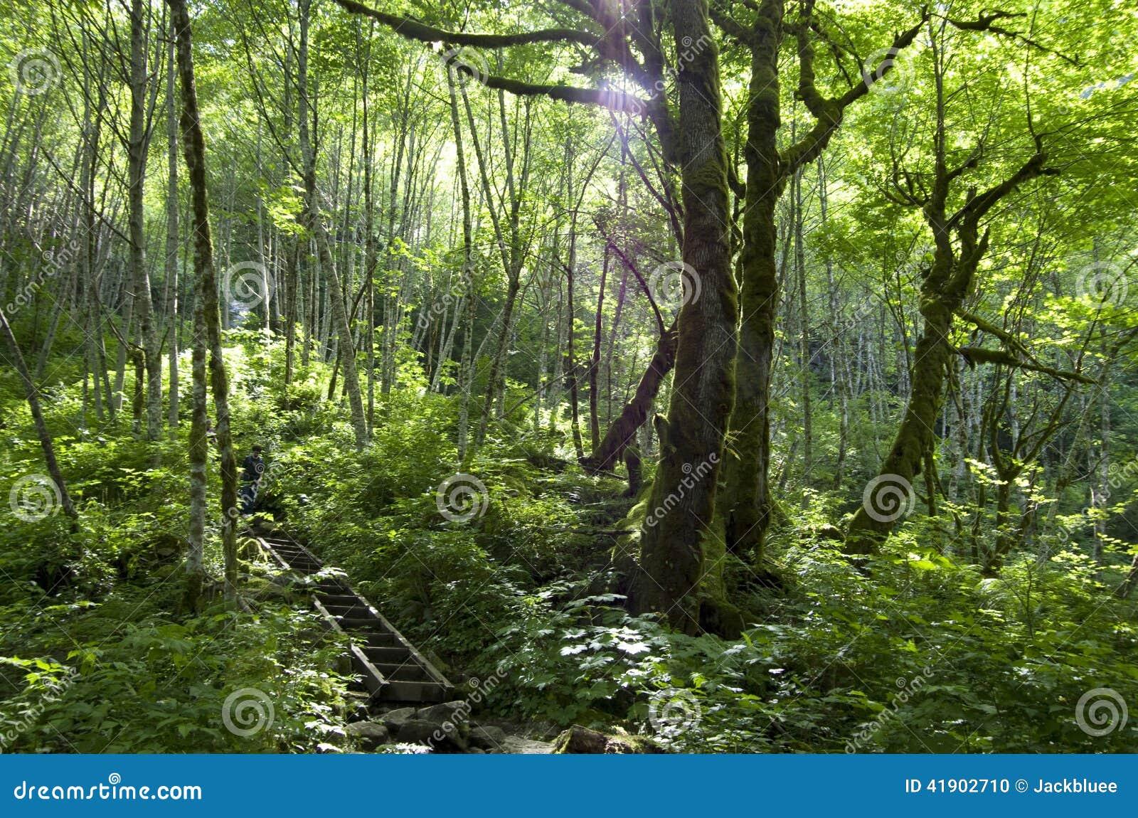 Rastro del bosque de la montaña