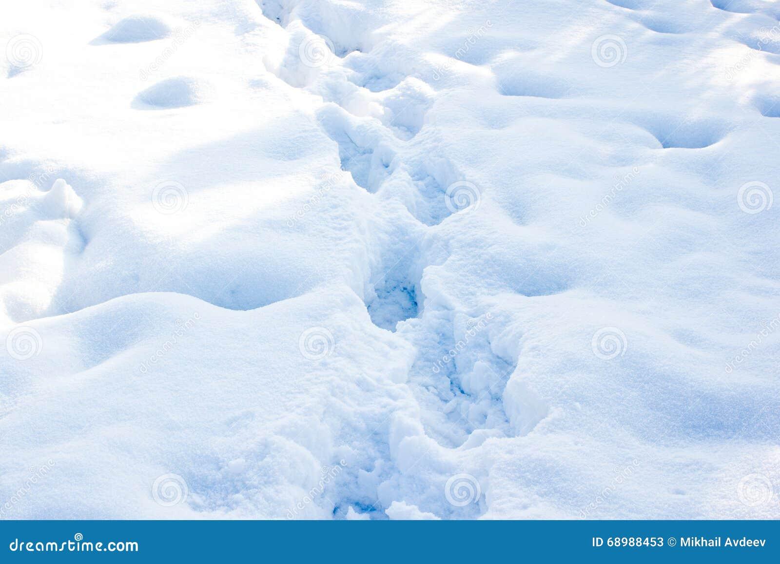 Rastro del invierno