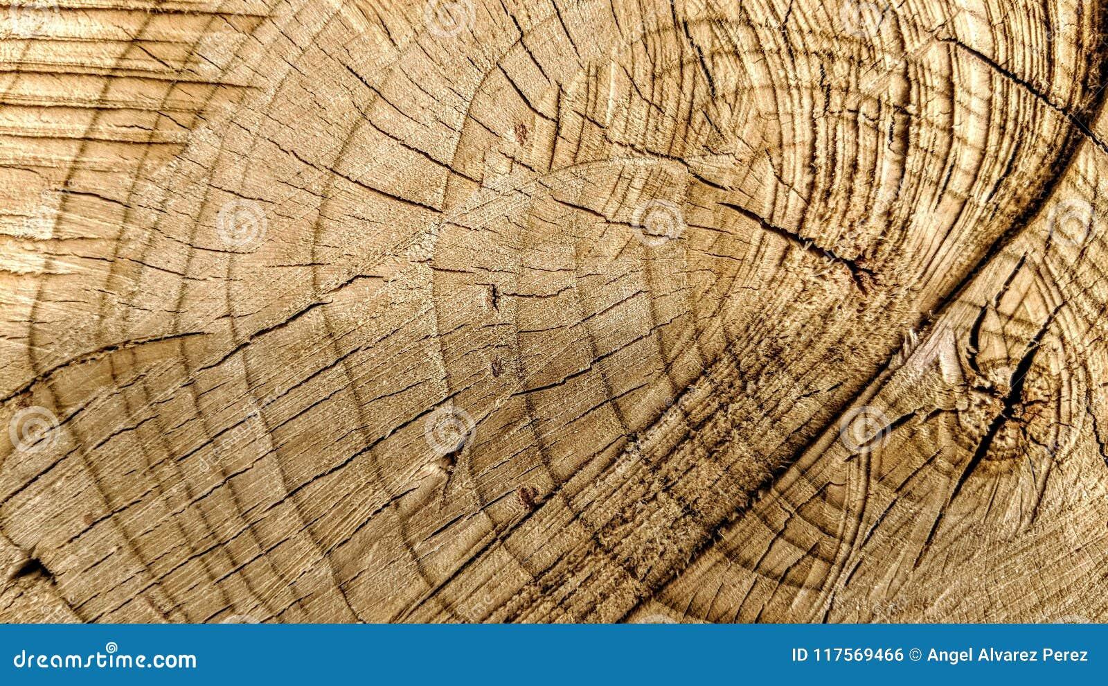 Rastros de cortes en un tronco