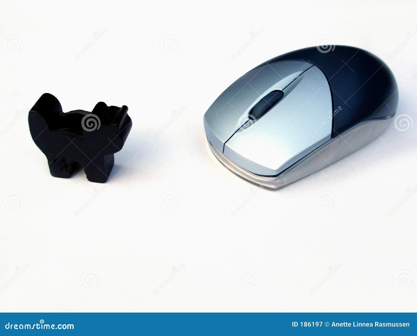 Ratón y gato