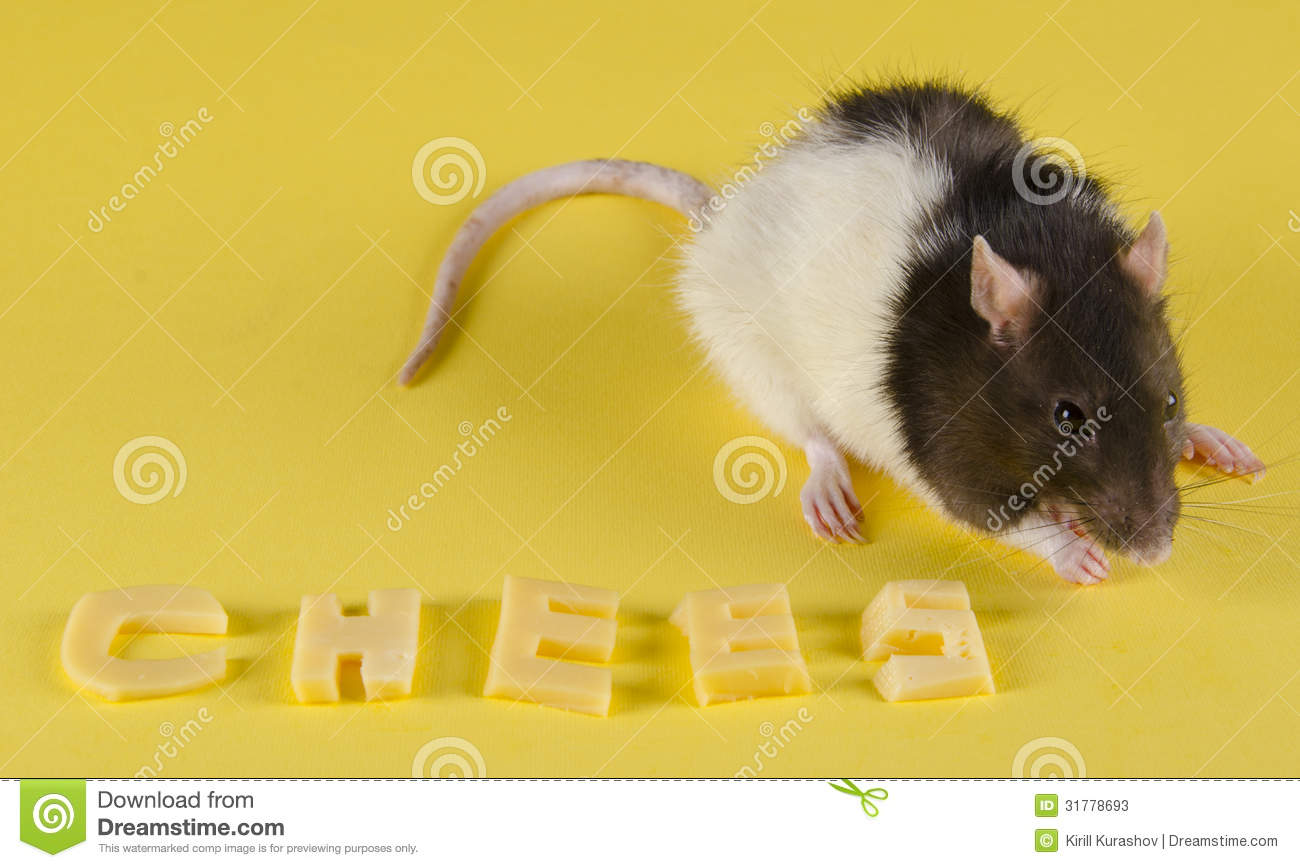 Letter Word For A Cute Pet Rodent