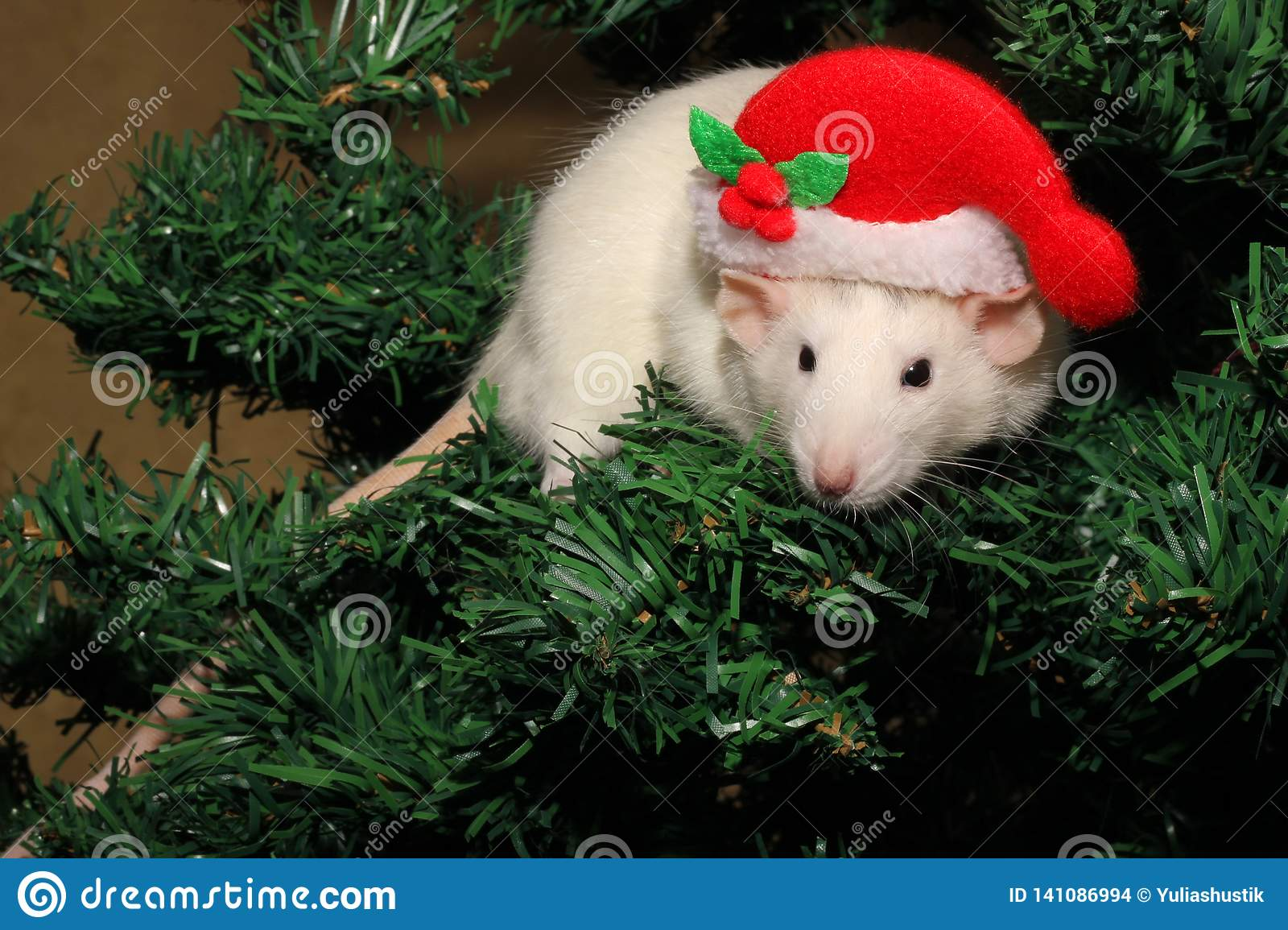Chinese Christmas.A Rat In A Christmas Hat A Christmas Mouse Symbol Of The