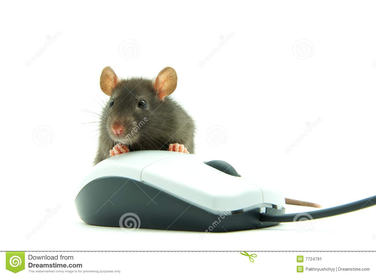 Cute Computer Mouse