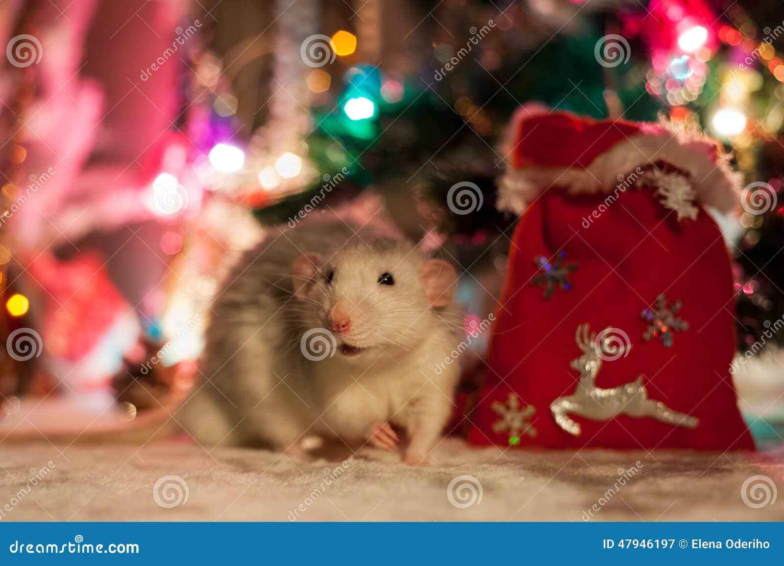 Rat décoratif sur un fond des décorations de Noël