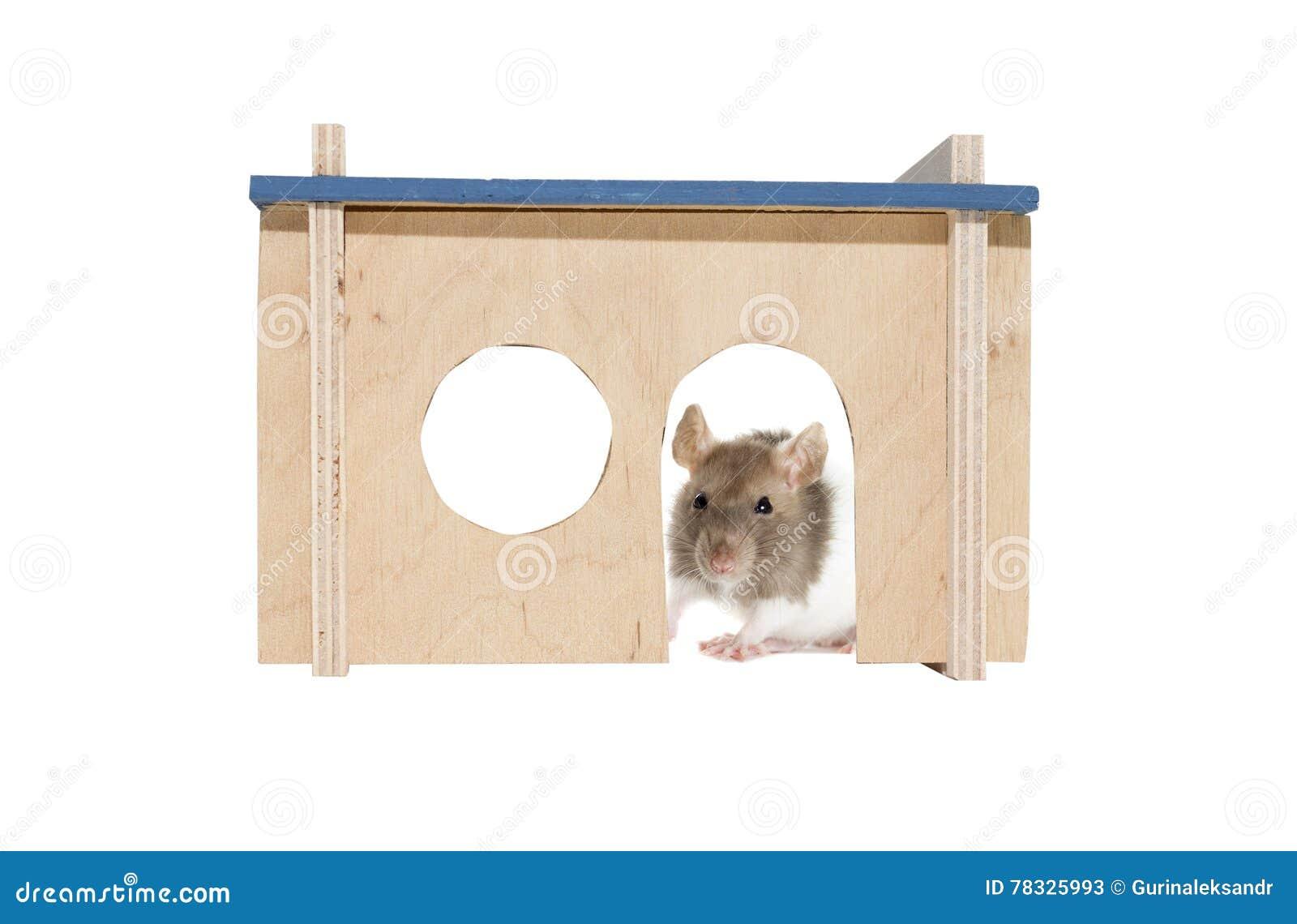 rat dans une maison comment tuer un rat dans une maison le rat noir au quebec with rat dans une. Black Bedroom Furniture Sets. Home Design Ideas