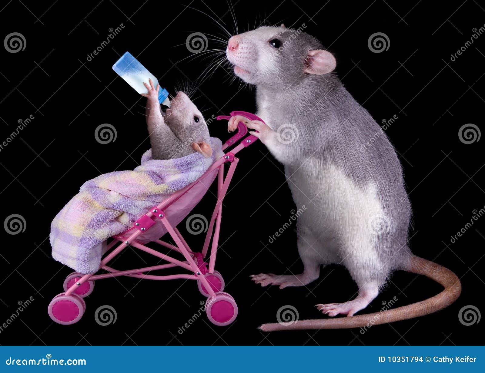 Rat de maman de chéri