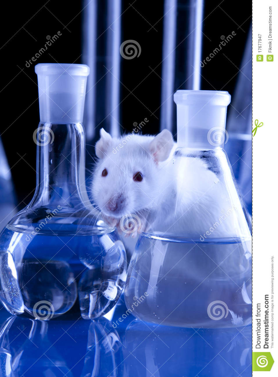 Rat In Lab. Animal Experiments Stock Image - Image of ...