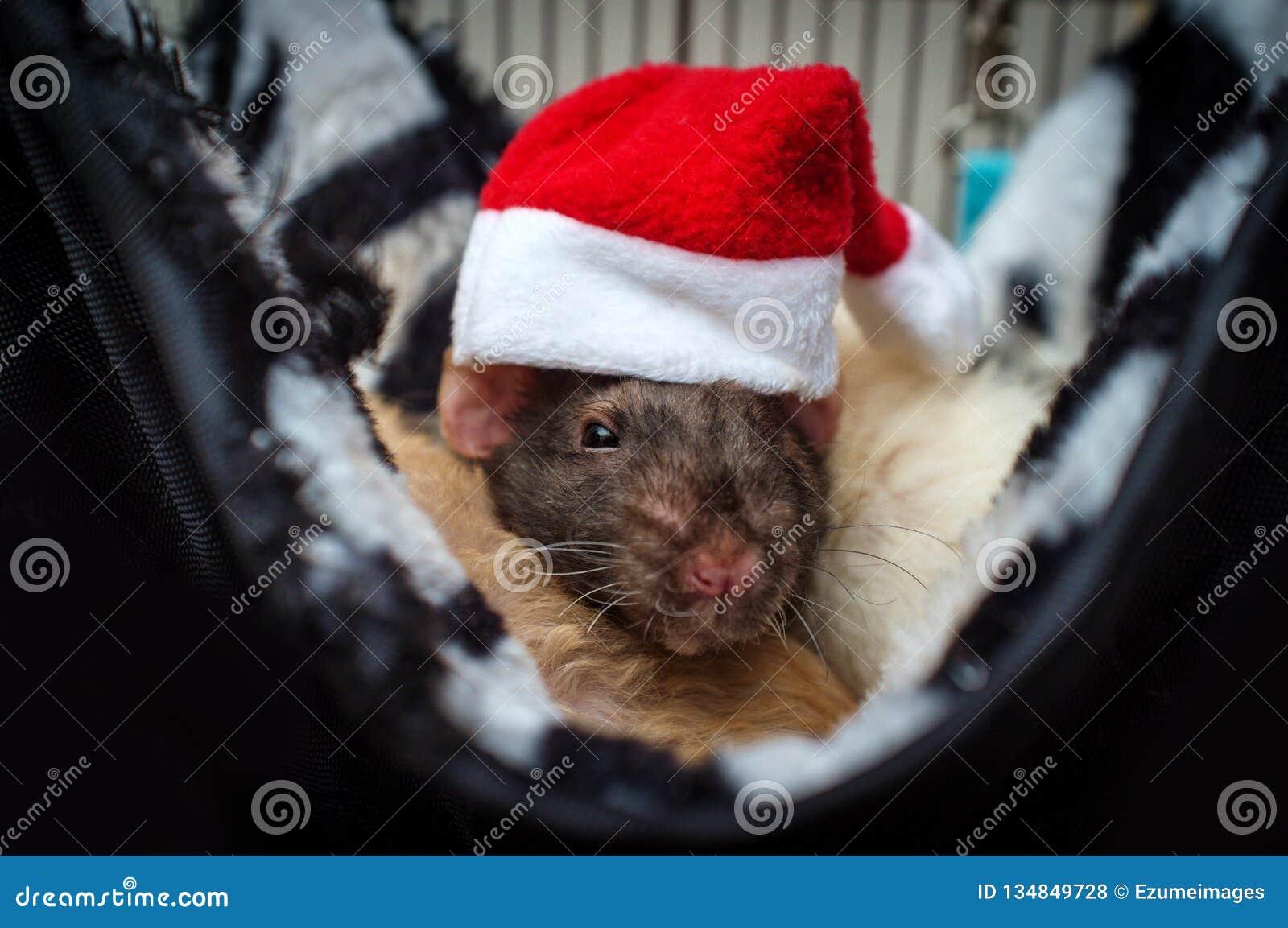 Rat Santa Hat d animal familier
