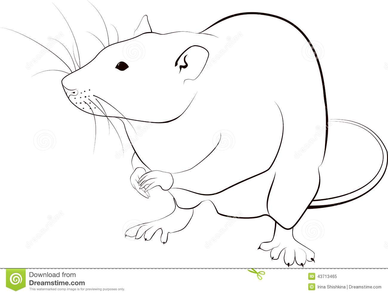Rat Sketch Stock Vector Image 43713465