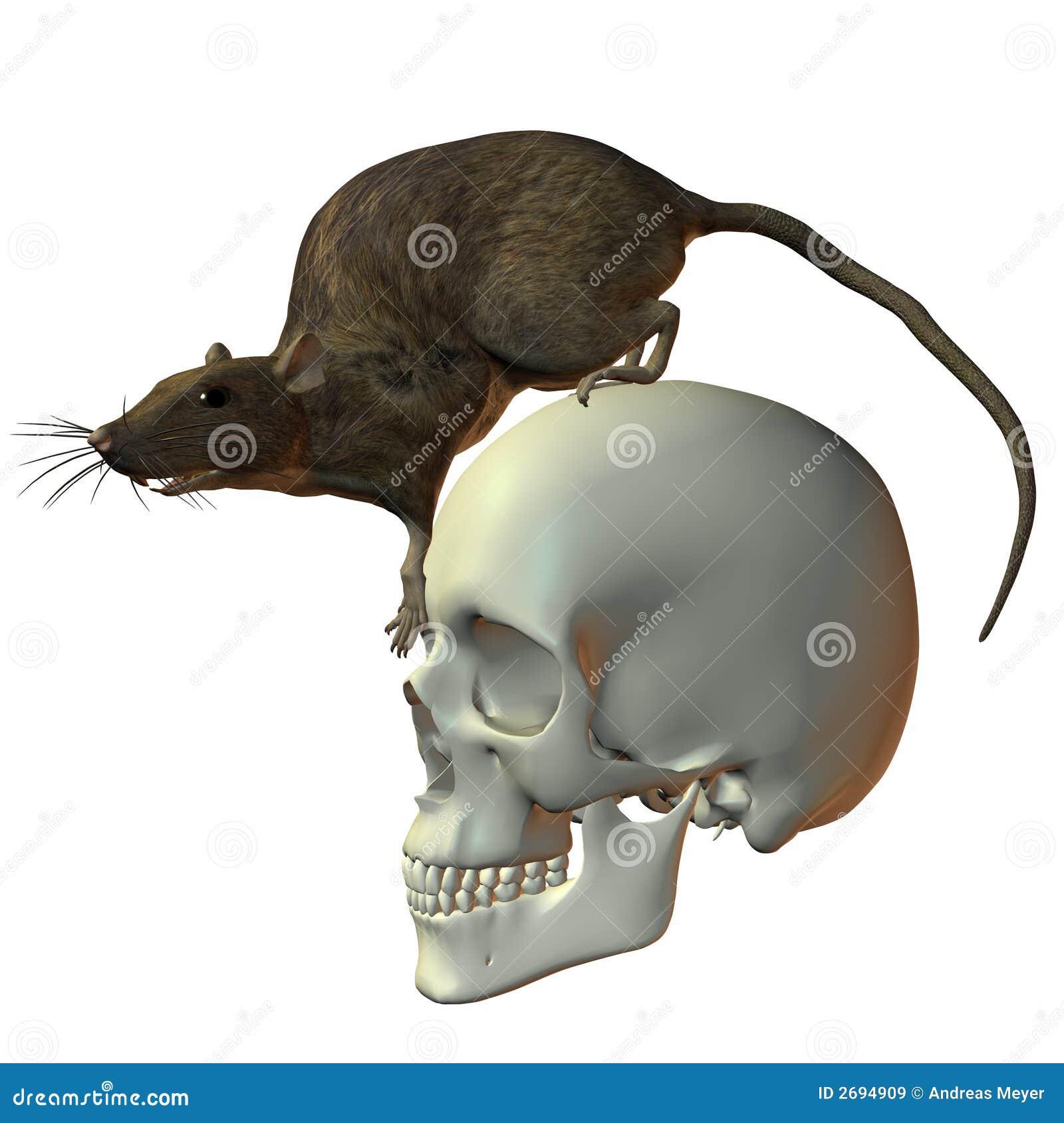 Rata en el cráneo stock de ilustración. Ilustración de diversión ...