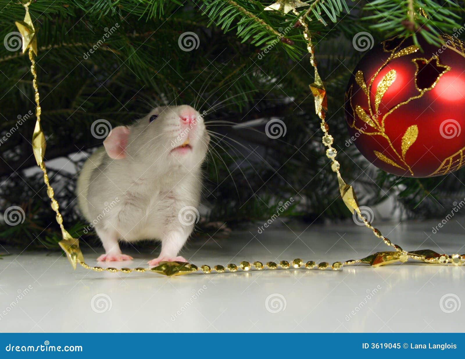 Rata y ornamentos de navidad foto de archivo libre de - Ornamentos de navidad ...