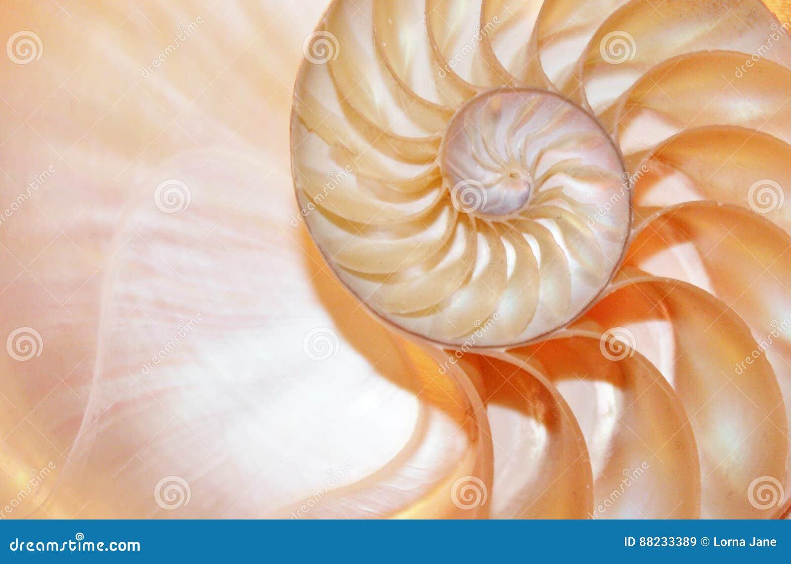 Ratio de oro del crecimiento espiral seccionado transversalmente de la estructura de la simetría de Fibonacci de la cáscara del n