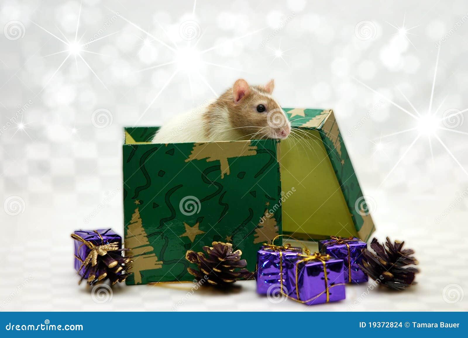 Rato na caixa