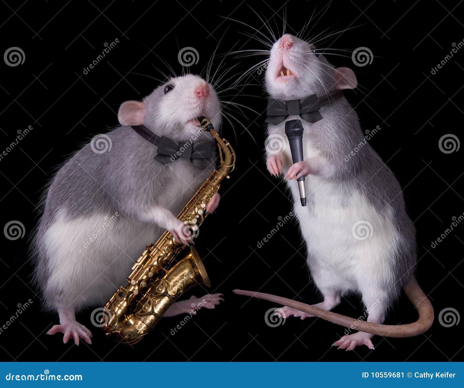 Ratos musicais