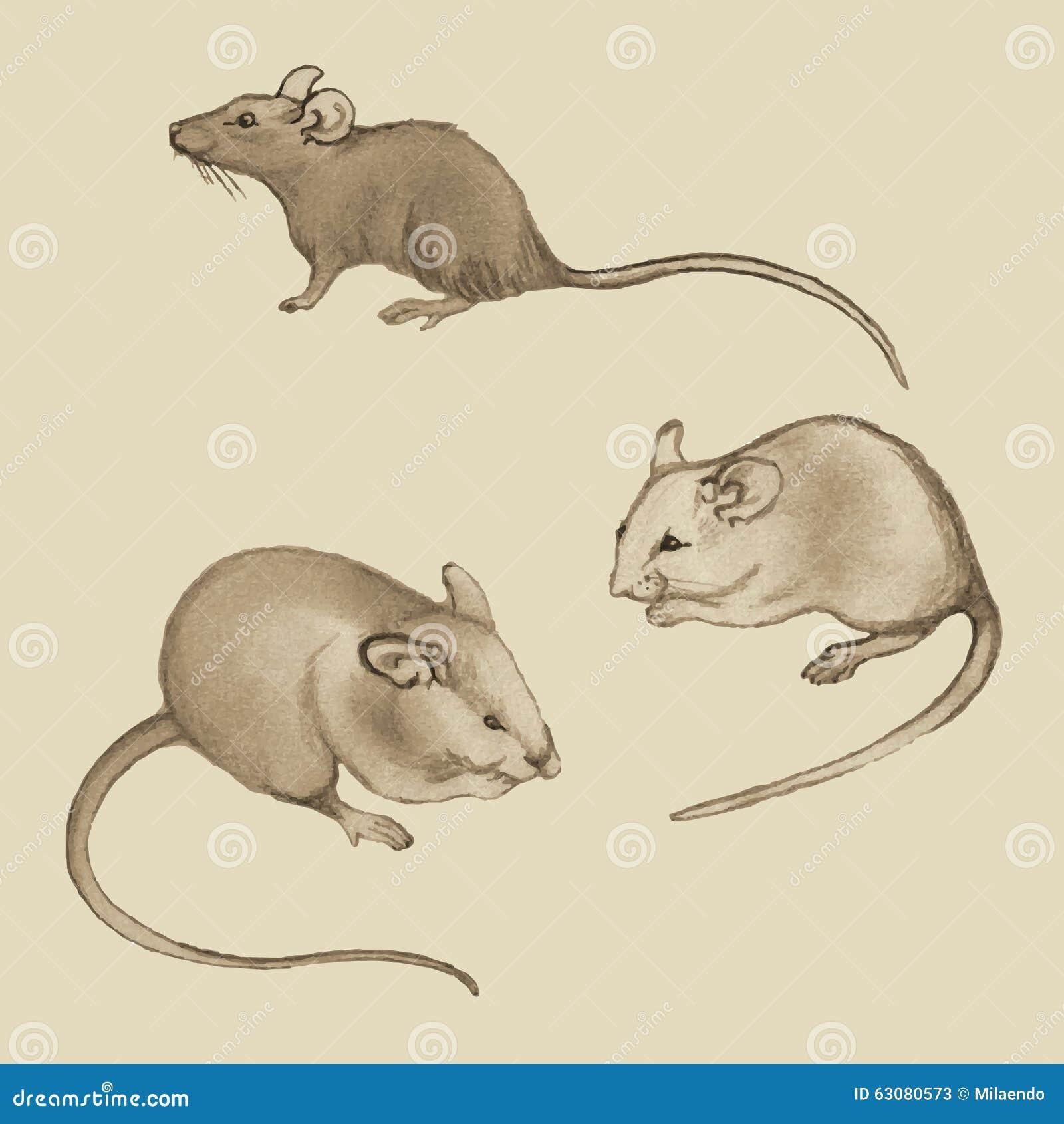 Download Rats (souris) - Dessinant à Main Levée Avec Un Crayon Illustration de Vecteur - Illustration du caractère, silhouette: 63080573