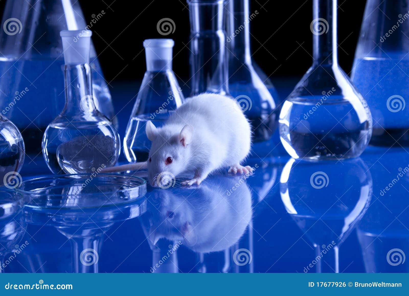 Ratten: Forscher lassen die Nager Licht fhlen - SPIEGEL