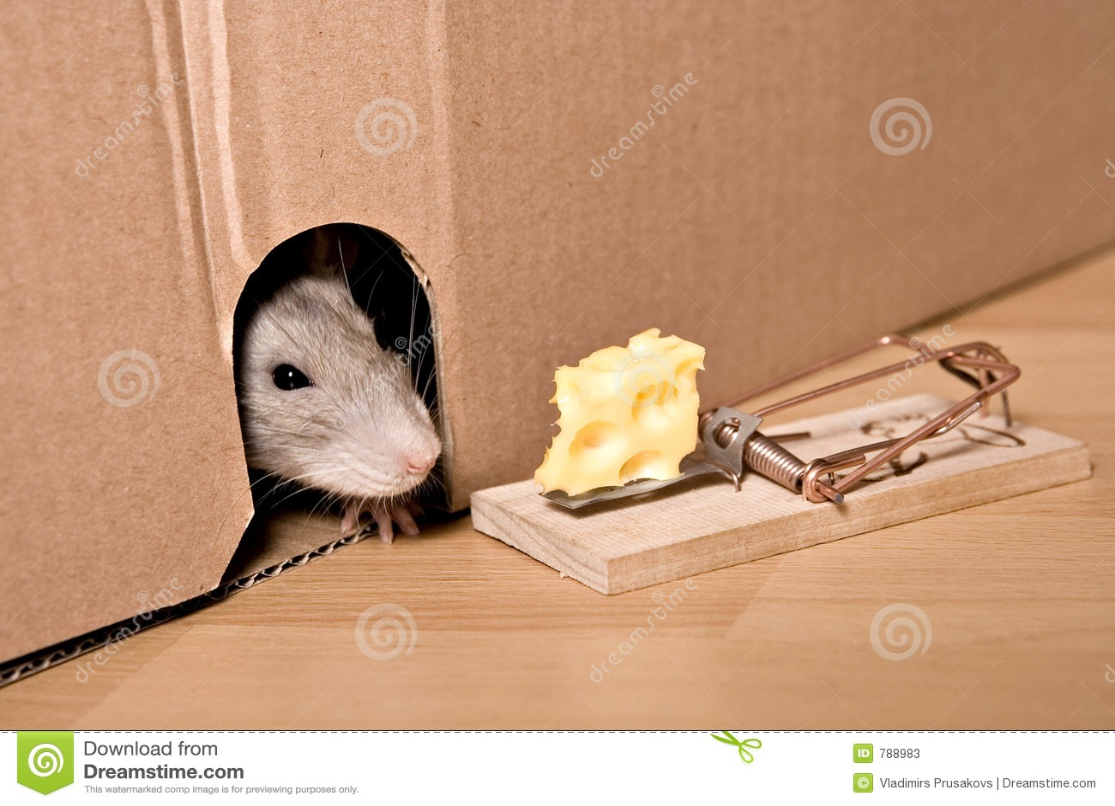 Ratte, Mousetrap und Käse