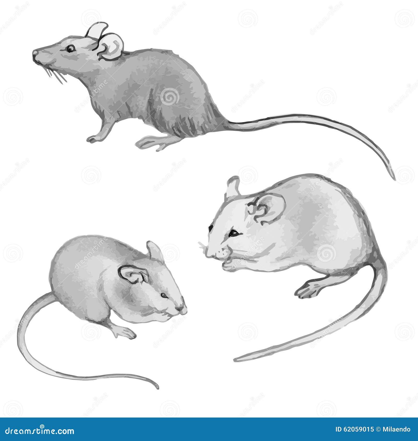 Ratten, muizen - potloodtekening met de hand (plaats)