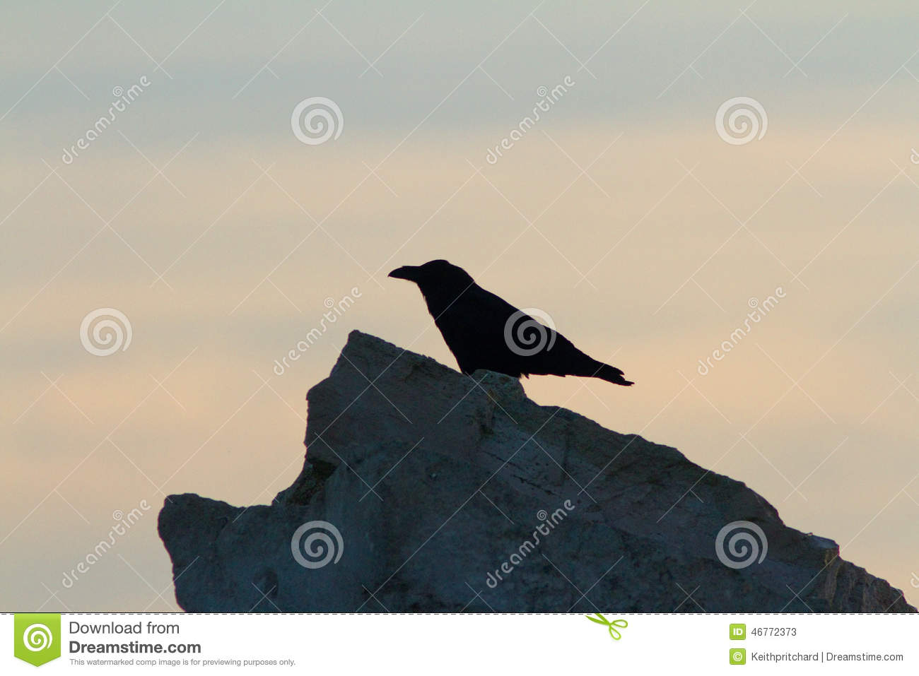Raven Bird On A Rock Symbol Of Ill Omen And Death Stock Image