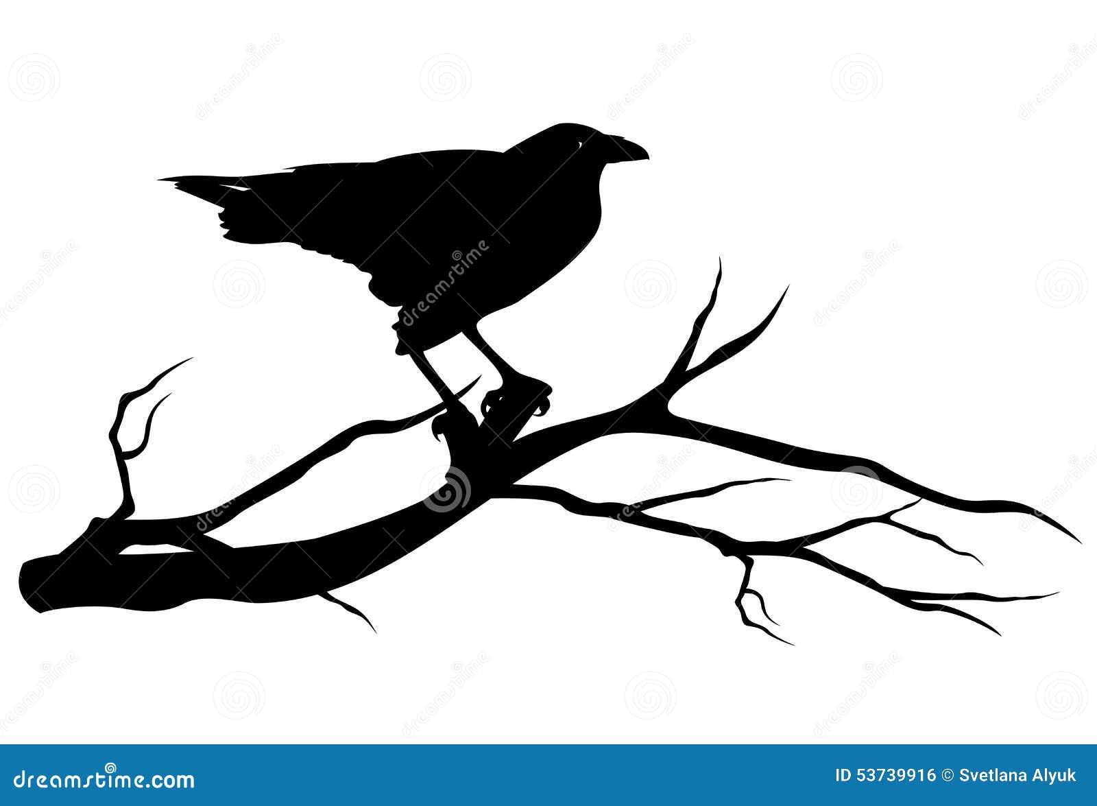 Raven bird on tree branch - black vector silhouette on white.