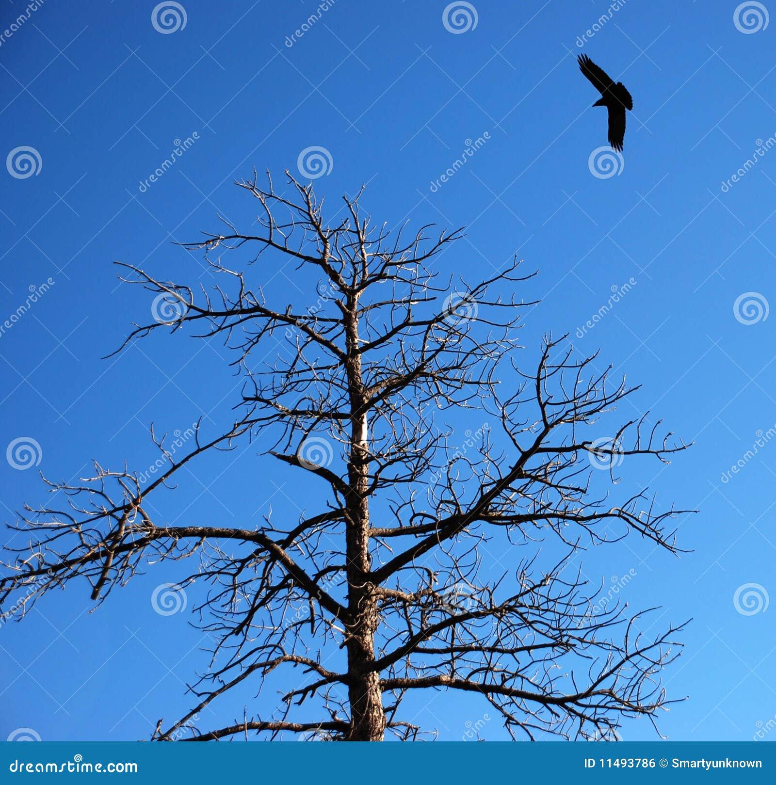 Raven dans les cieux