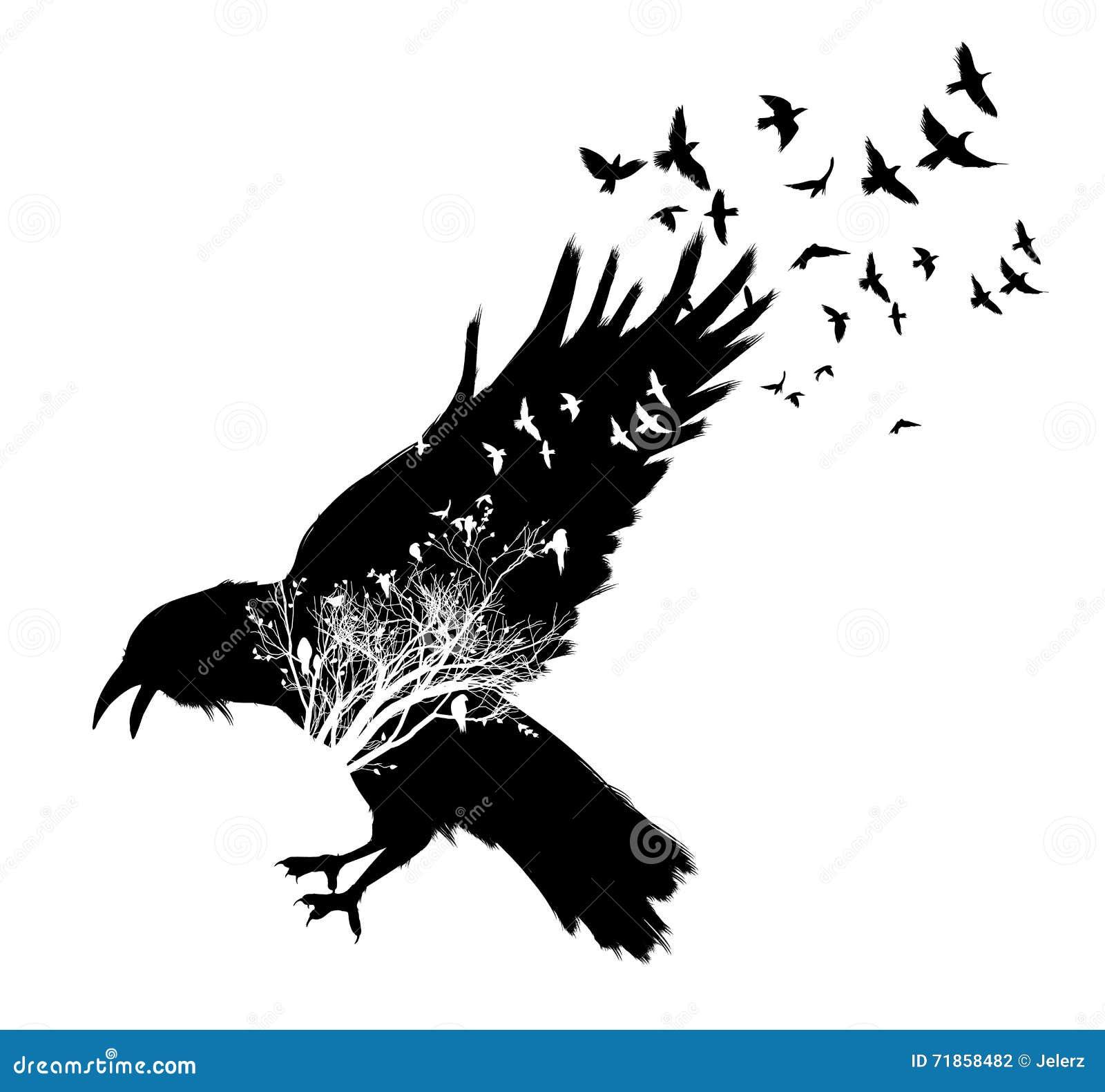 Line Drawing Raven : Raven double exposure stock vector image