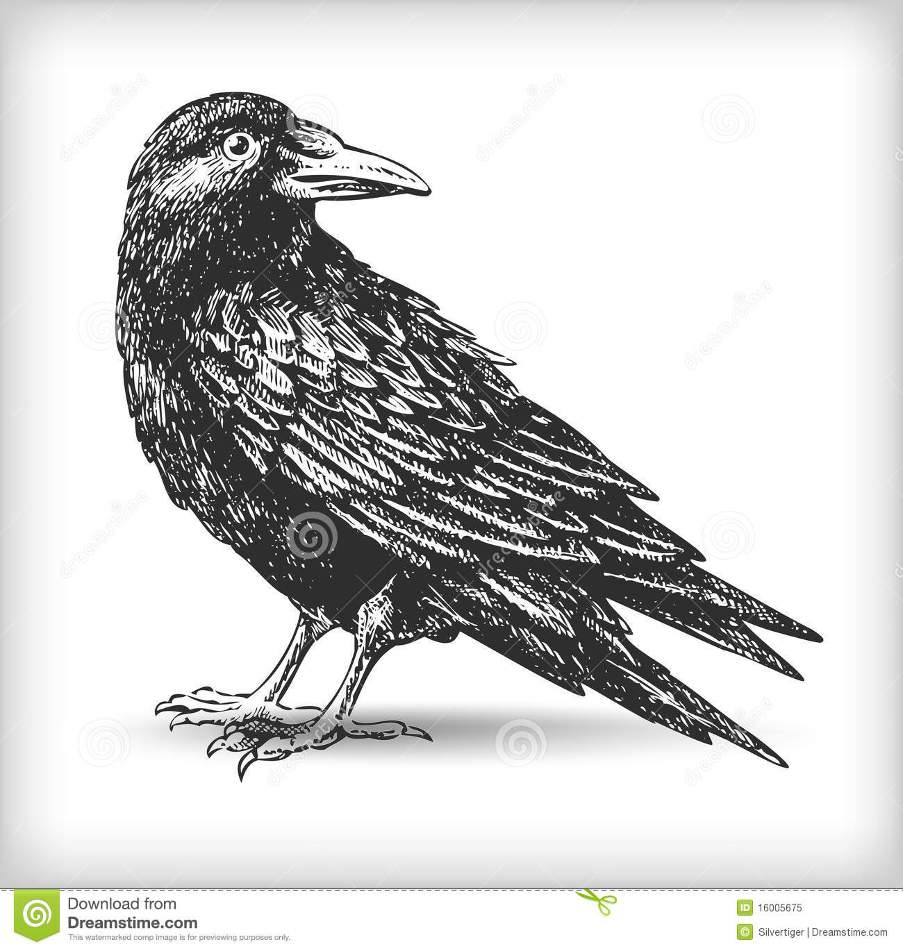 Line Drawing Raven : Raven drawing stock vector illustration of line hand