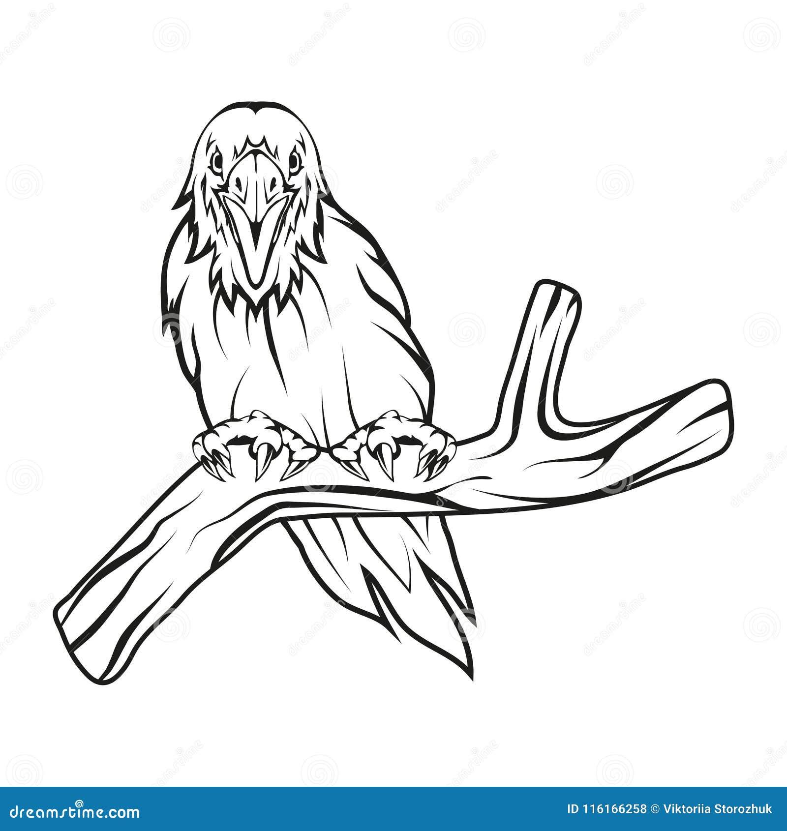 Crow Head Drawing Line Work Vector Vector Illustration