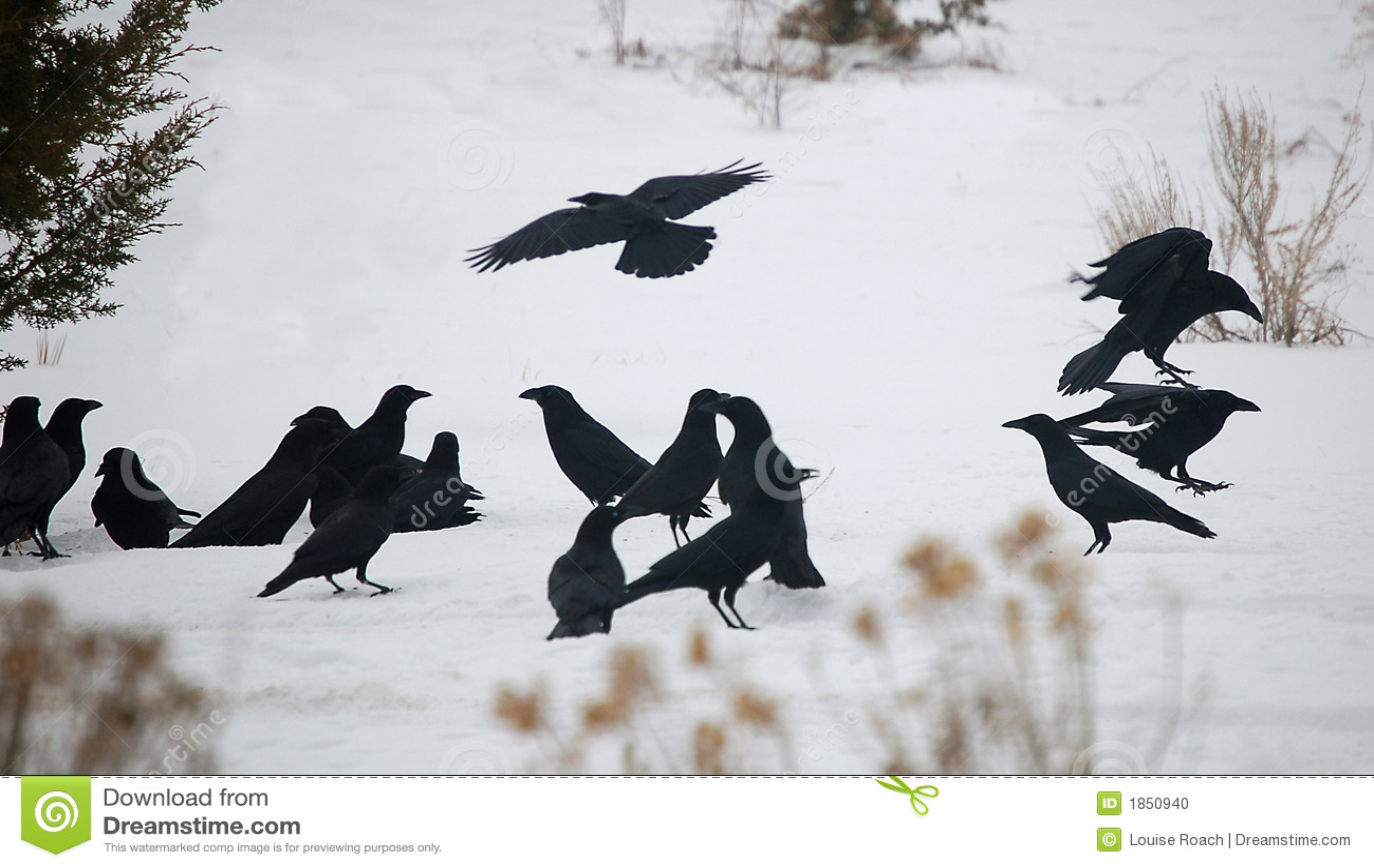 Raven konwencji