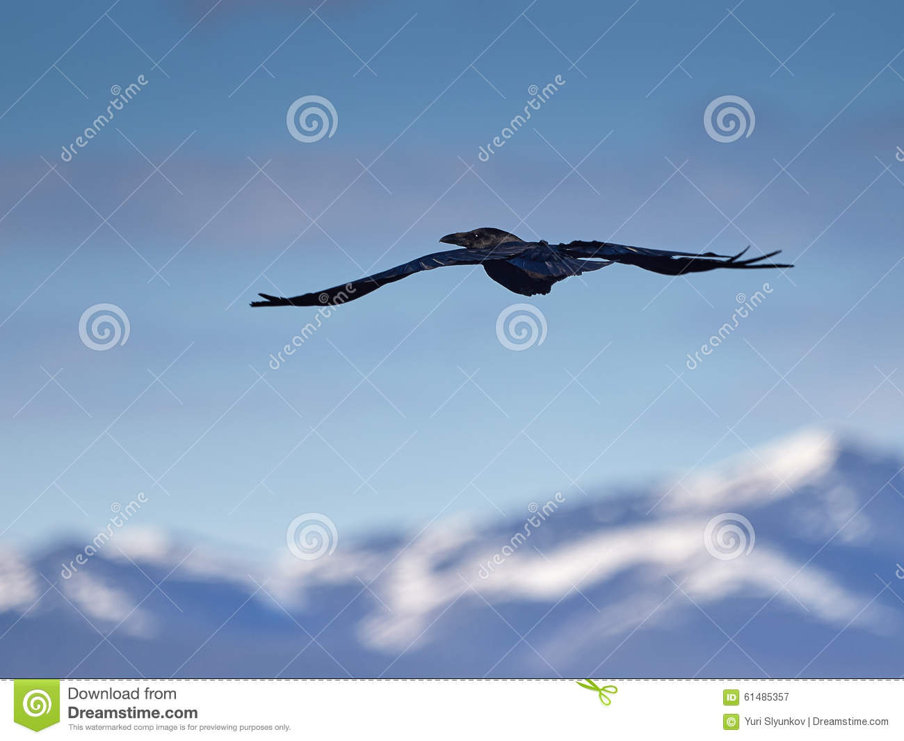 Download Raven in mountains stock image. Image of bird, travel - 61485357