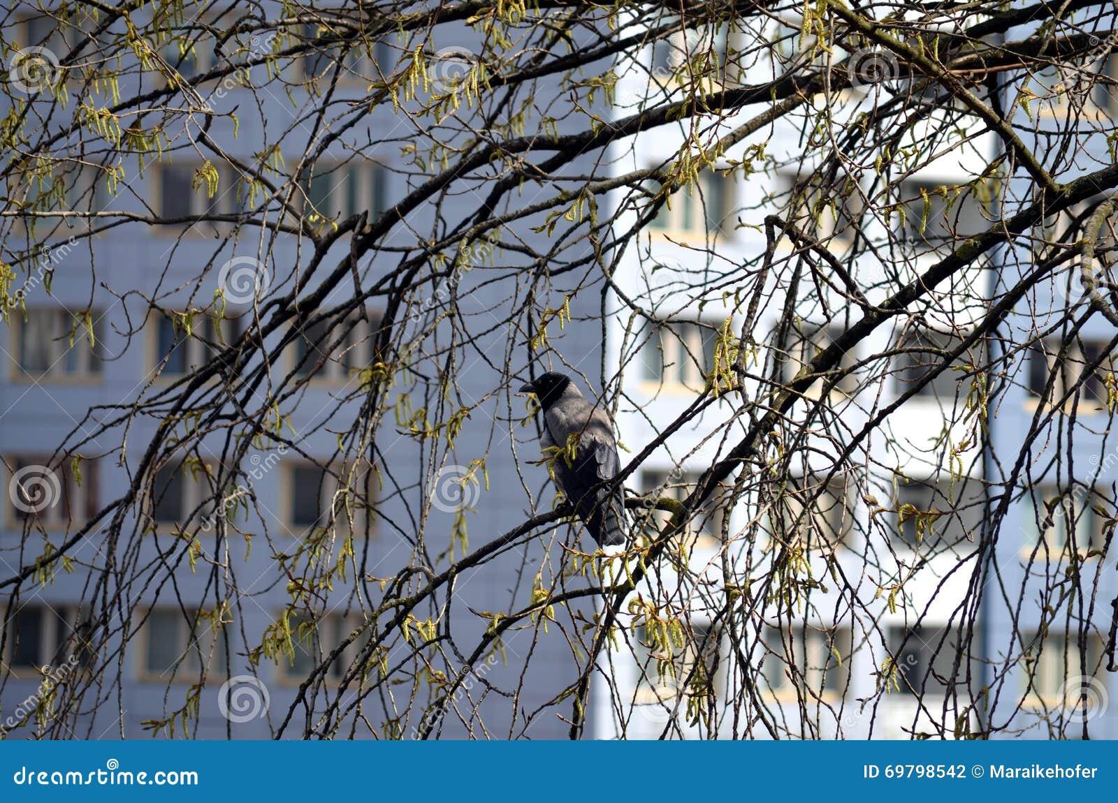 Raven se reposant sur un arbre