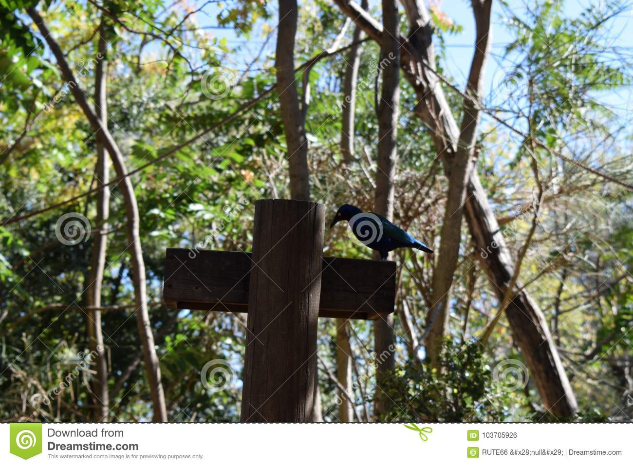 An Scary Symbol Of Halloween Stock Photo Image Of Hanging Around