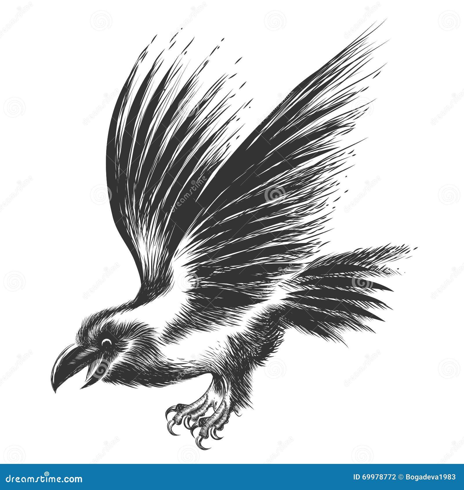 Raven Head Sketch