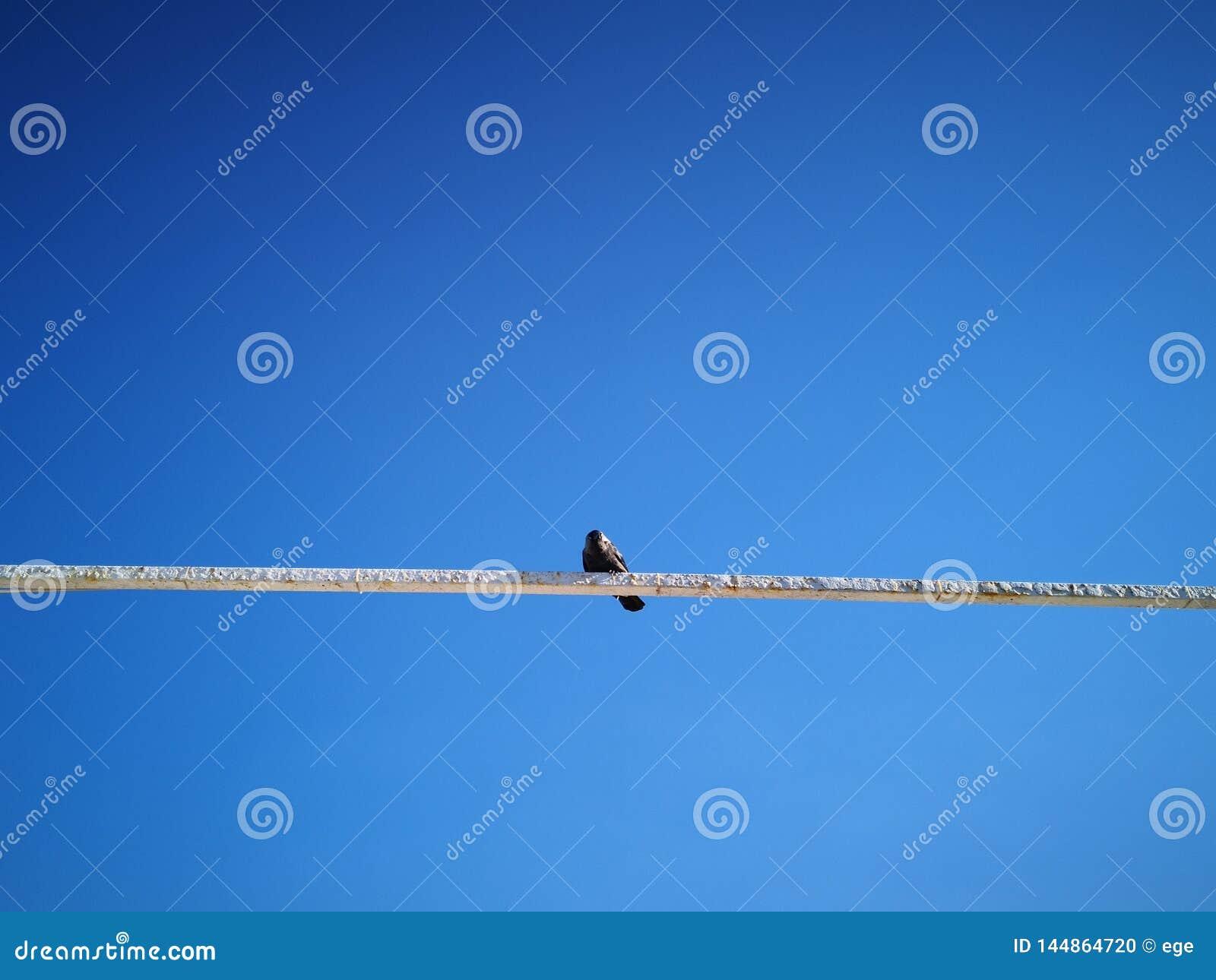 Raven sur le toit