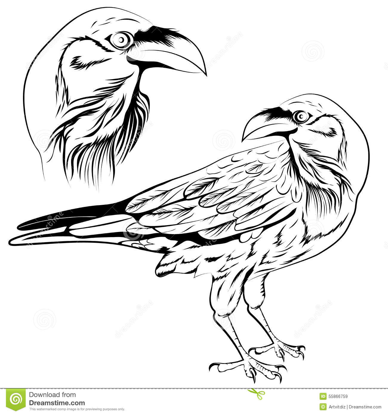 Line Drawing Raven : Raven vector stock image