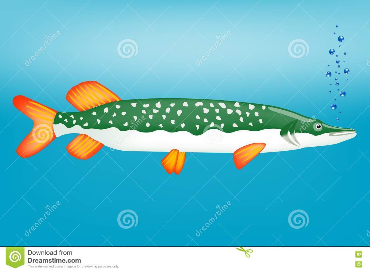 Ravenous fish pike stock images image 19203904 for Freshwater cleaner fish