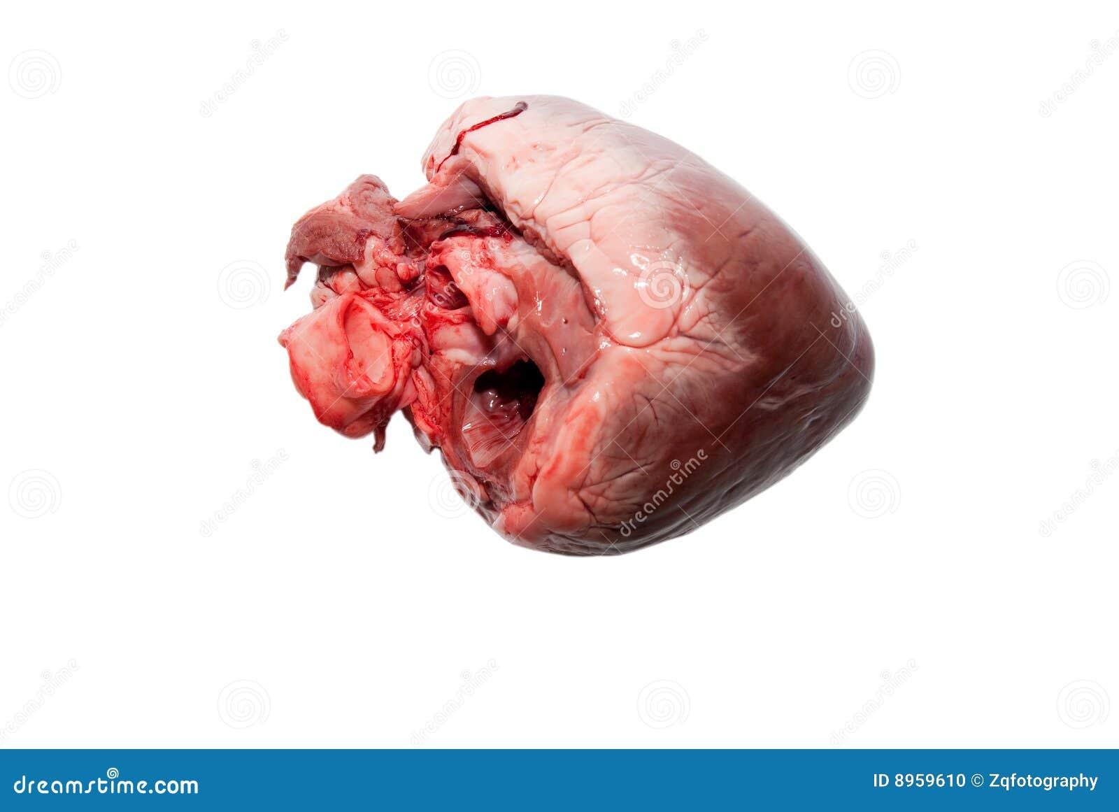Raw animal heart isolated on white background.