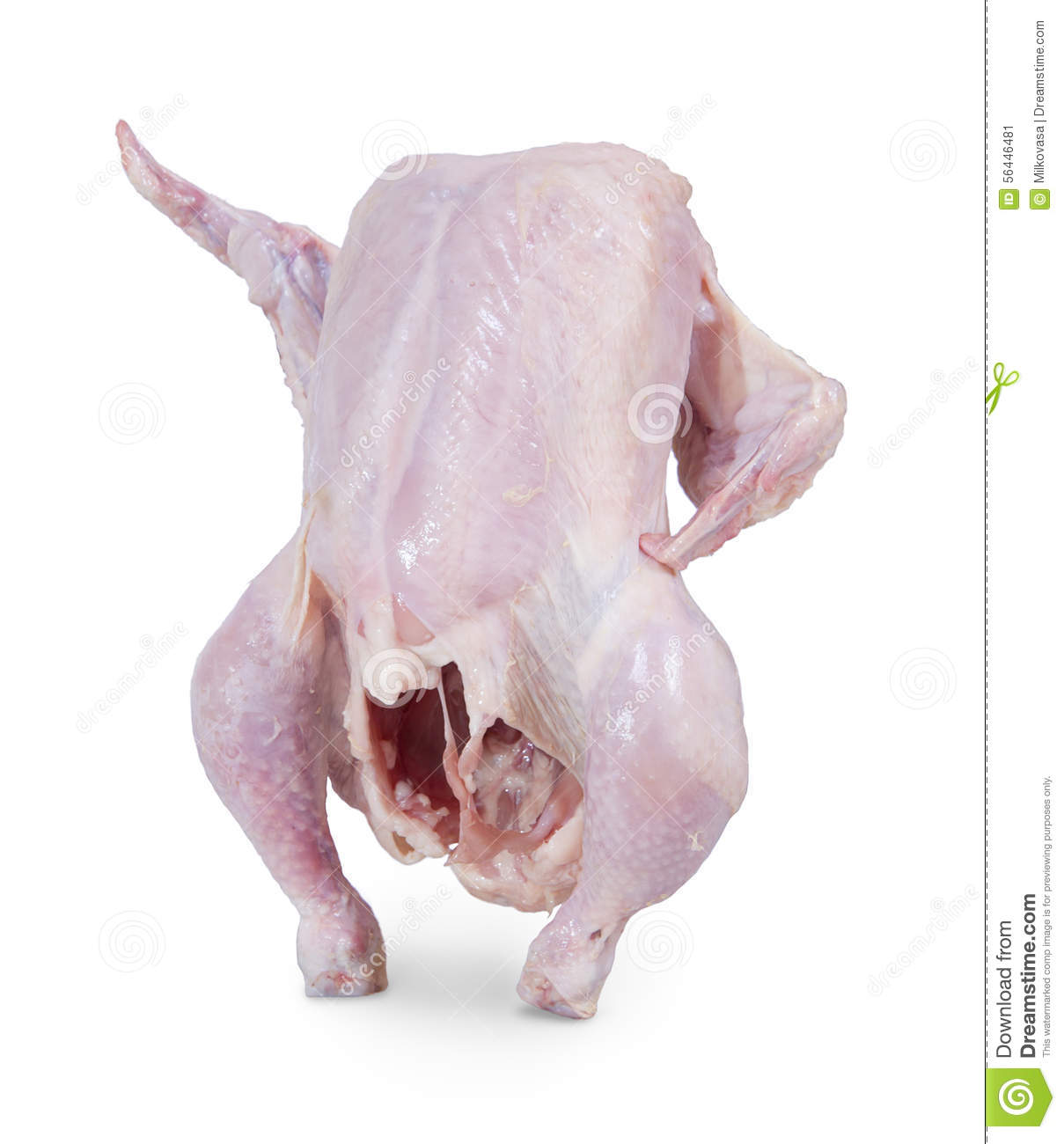 raw chicken shows up wing stock photo image 56446481 hen clip art images hen clip art for teachers