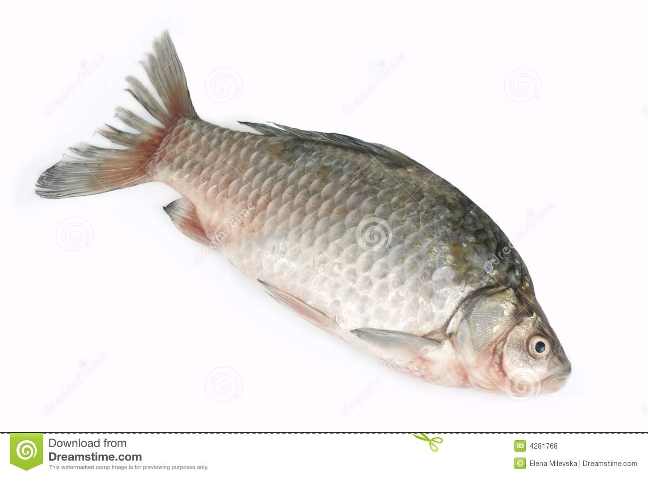 Raw fish stock photo image of restaurant nutritive cook for Image of fish