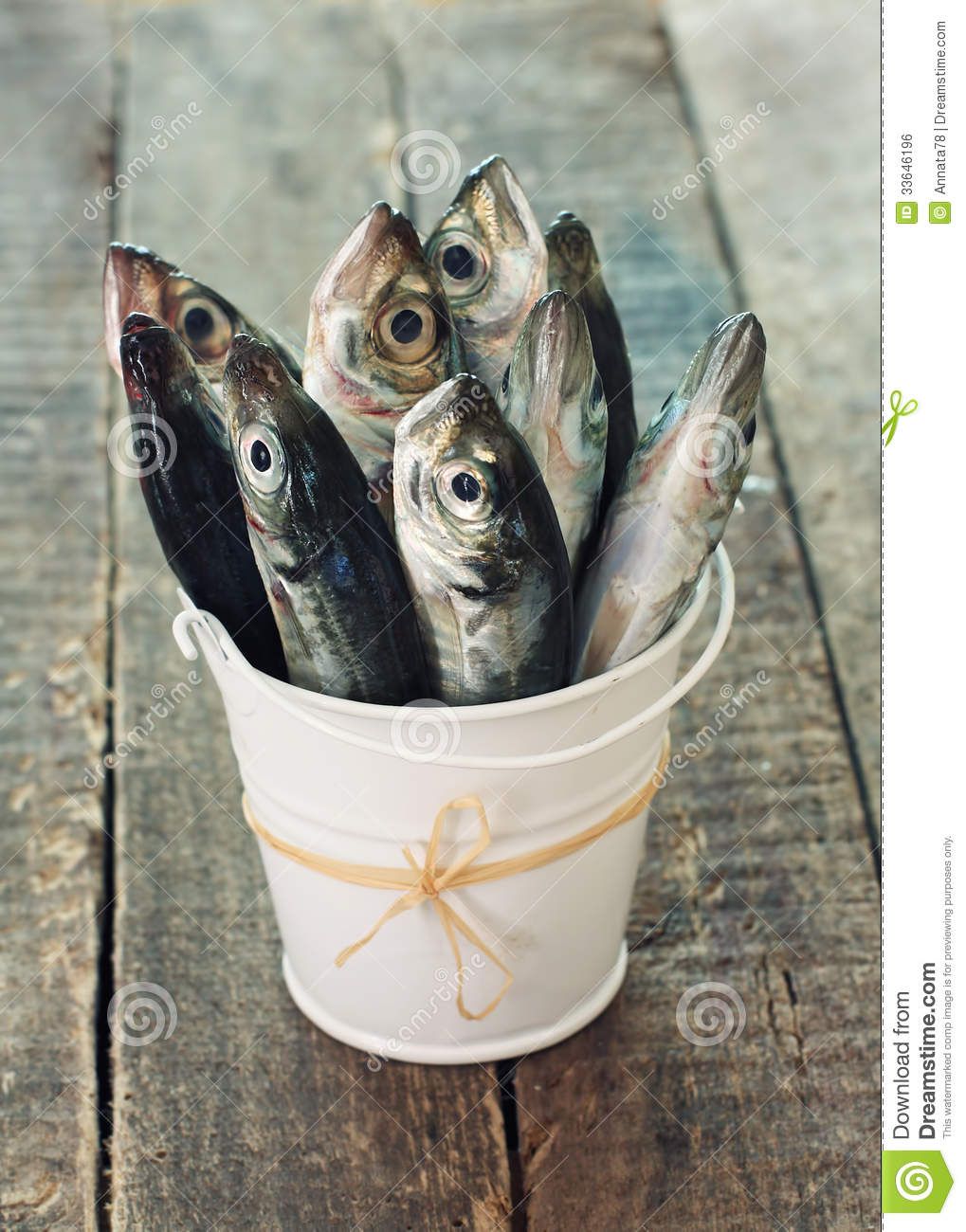 Raw fish scad in bucket stock photo image of pail for Bucket of fish