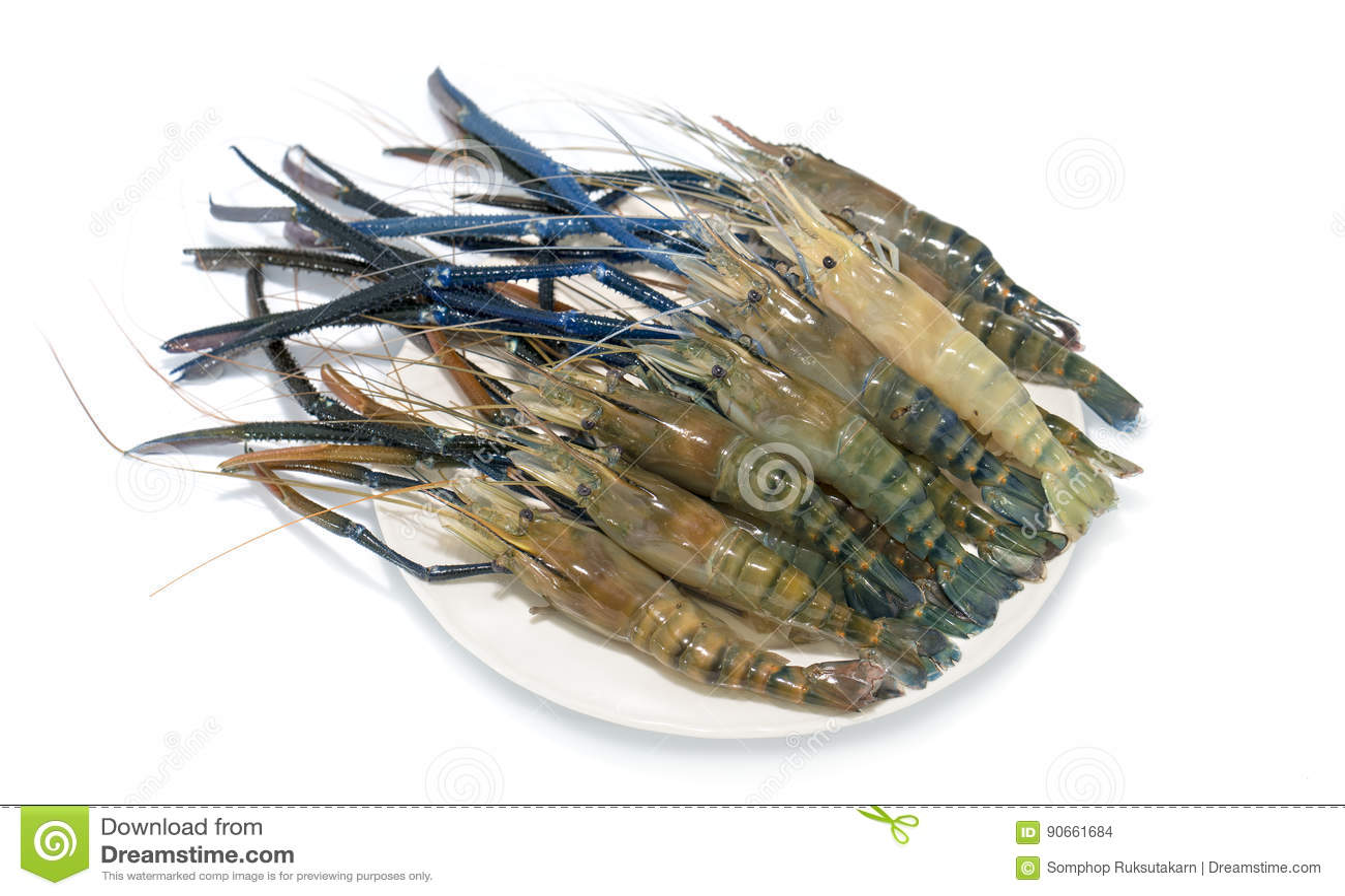 Raw giant freshwater prawn stock photo  Image of cuisine
