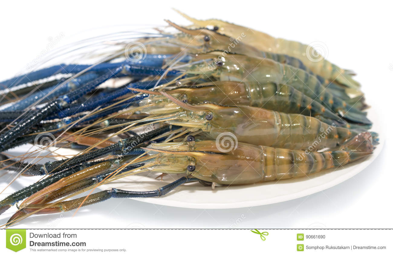 Raw giant freshwater prawn stock photo  Image of meal - 90661690
