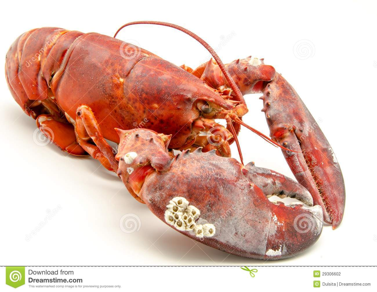 Raw Lobster Stock Phot...