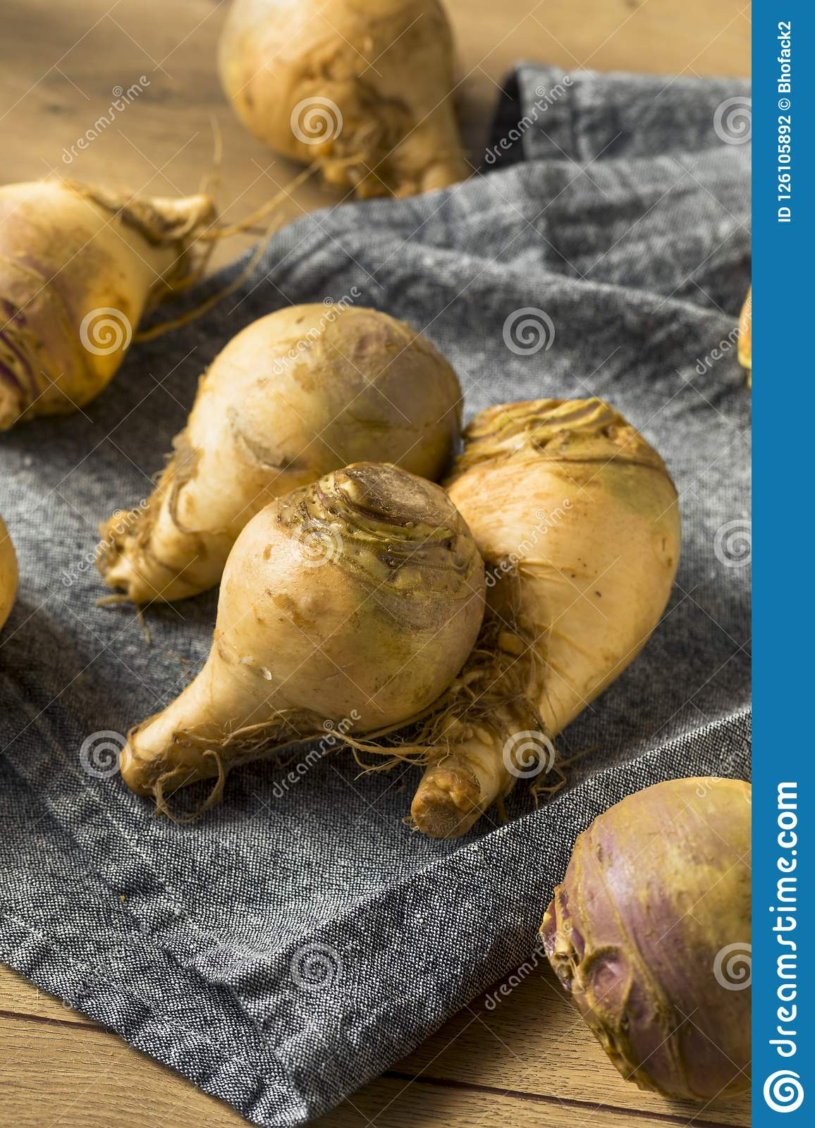 Raw Organic Brown Rutabaga Root Stock Photo Image Of Root Plant