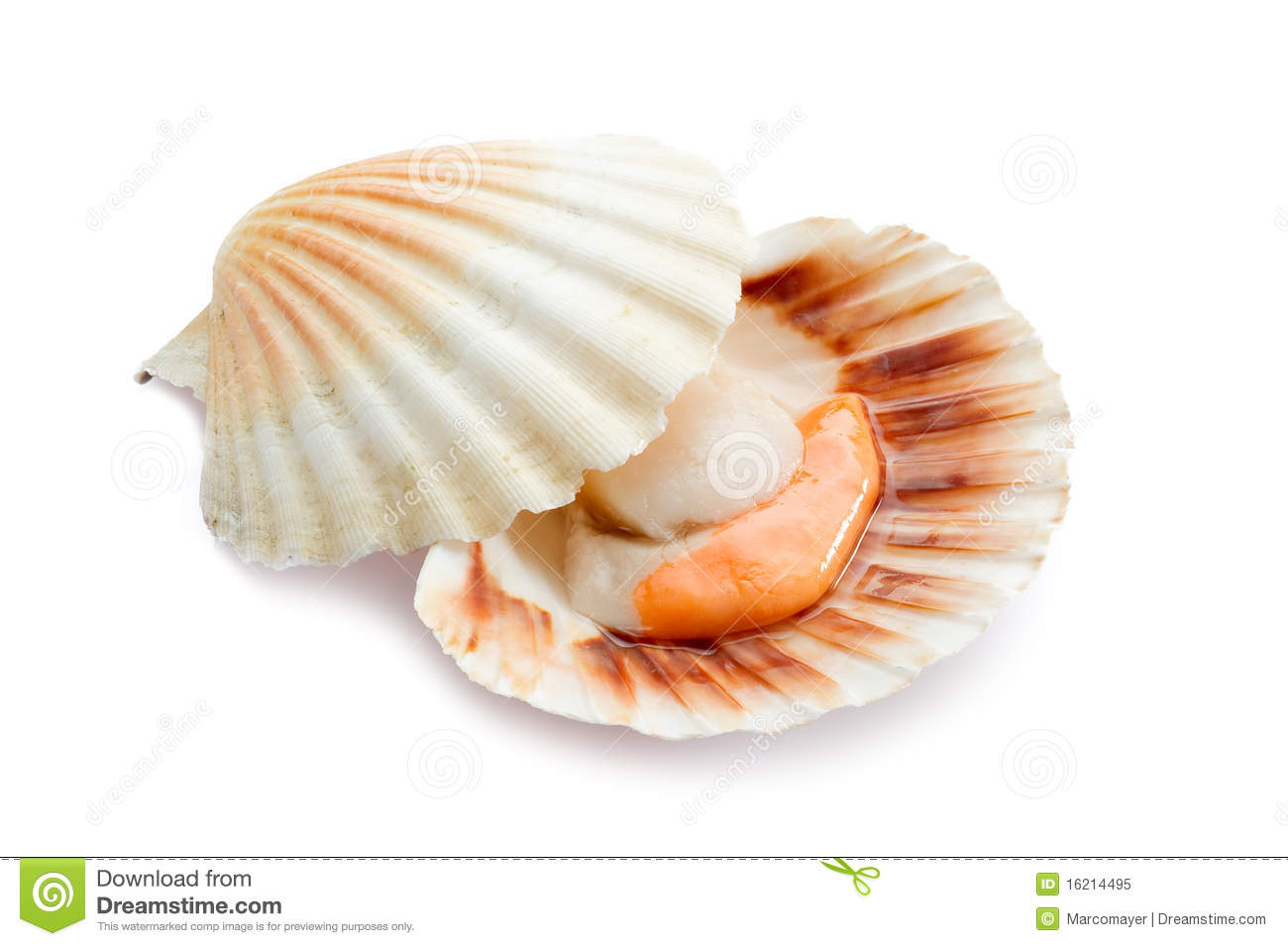 Raw Scallop On White Royalty Free Stock Photo - Image: 16214495