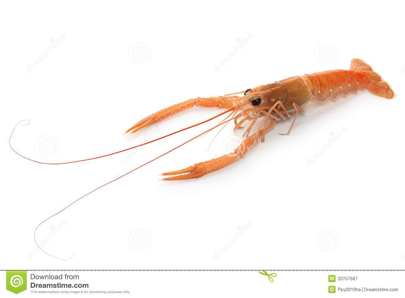Raw Scampi Royalty Free Stock Photography - Image: 33757587