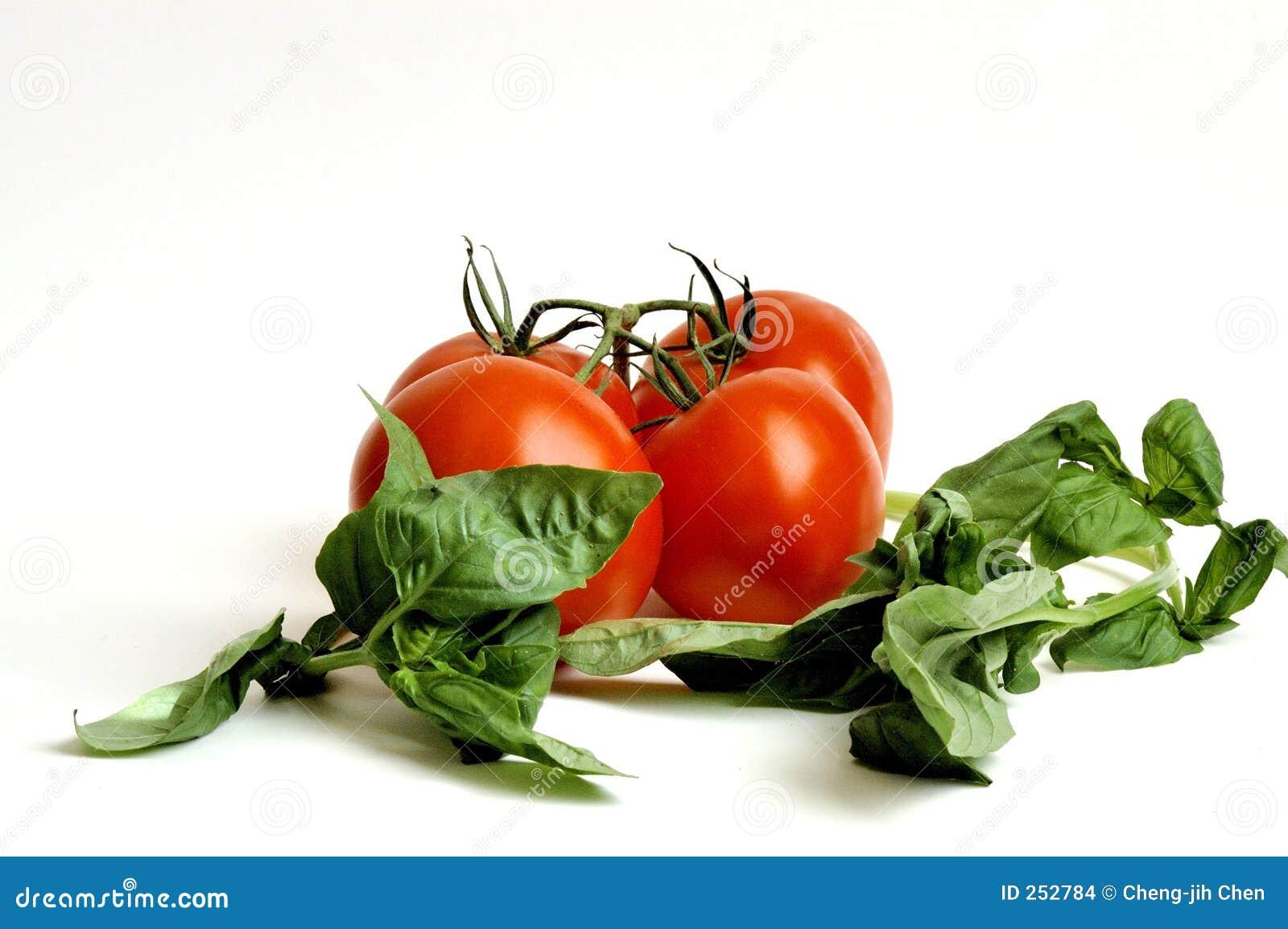 Raw Tomatoes and Basil