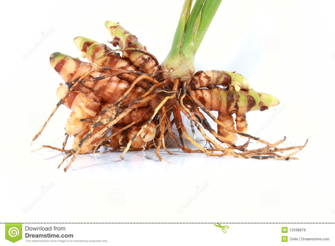 raw-turmeric-plant-roots-12598876.jpg