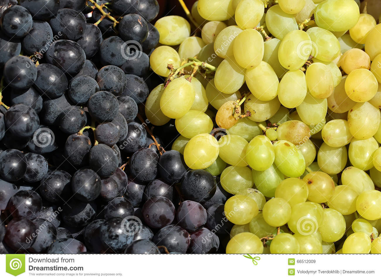 raw white and black grapes stock image. image of organic - 66512009